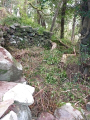 Holy Well, being cleared. Inchagoill, Lough Corrib